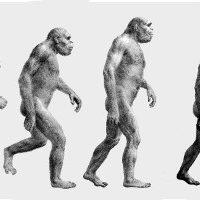 The Original March of Progress